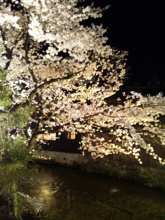 京都に来ました!