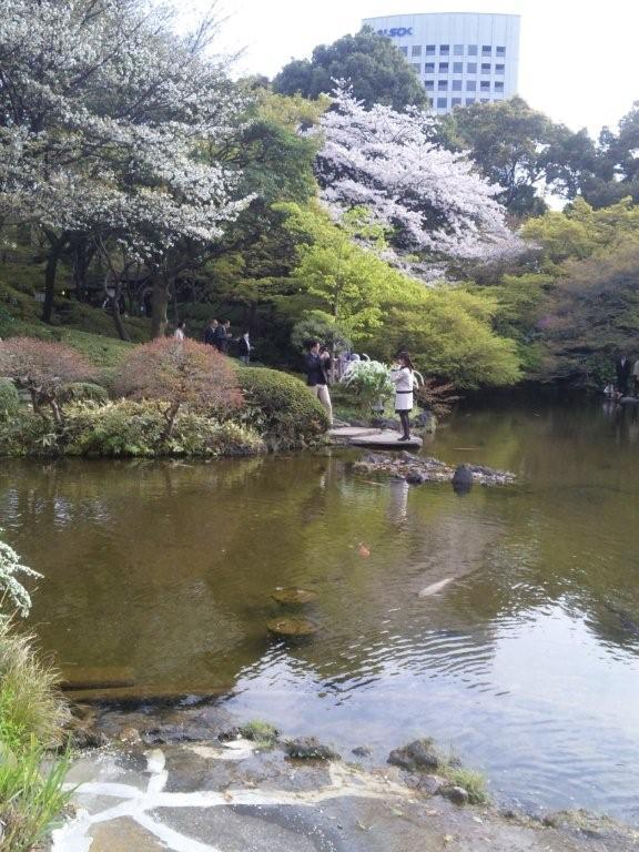 桜満開(ニューオータニの庭園)
