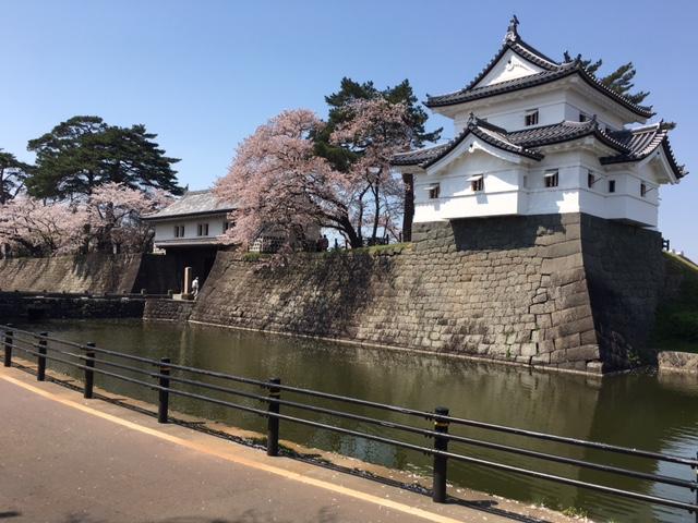 新発田の桜