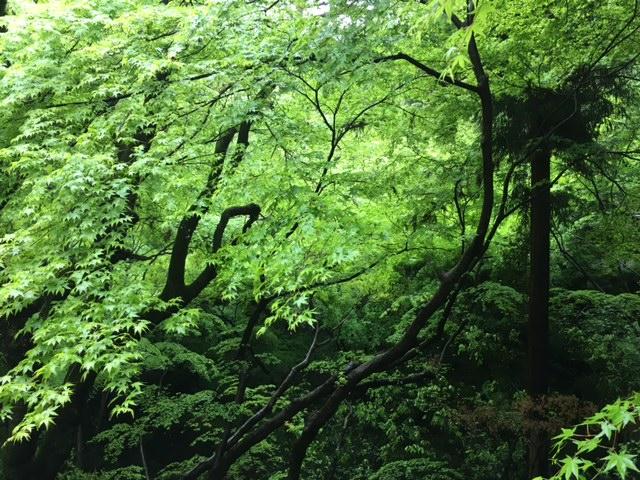 今朝は京都